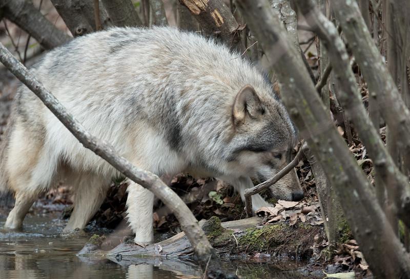 Seacrest Wolves_-77.jpg