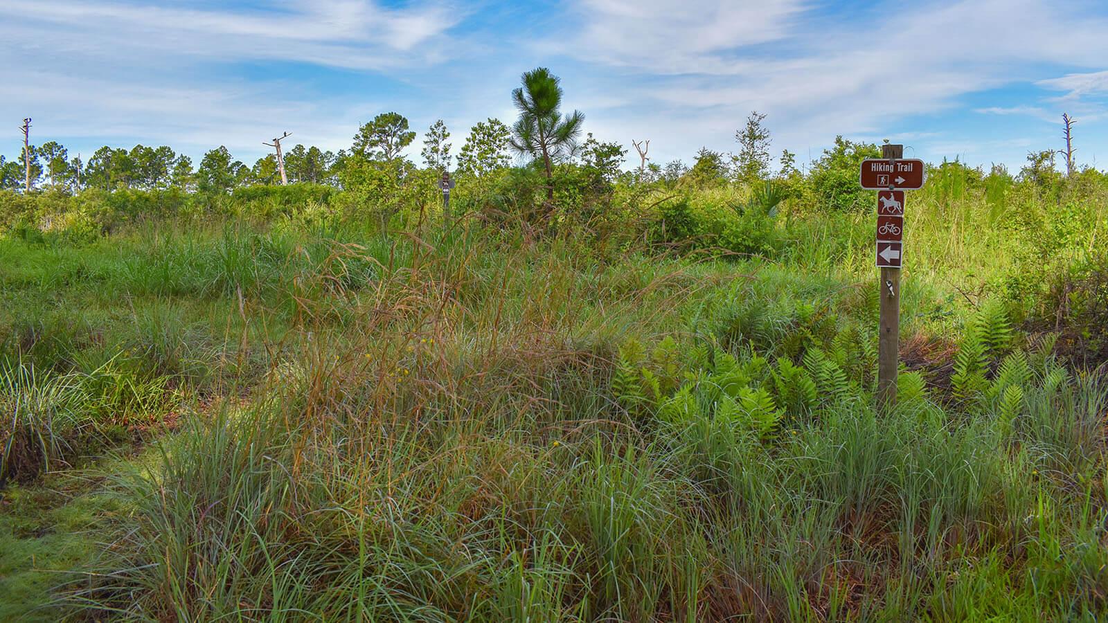 Trail sign amid tall grass