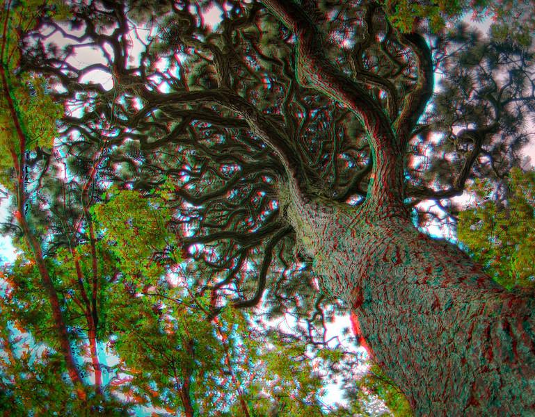 AC_SOPH_HDR_15.jpg