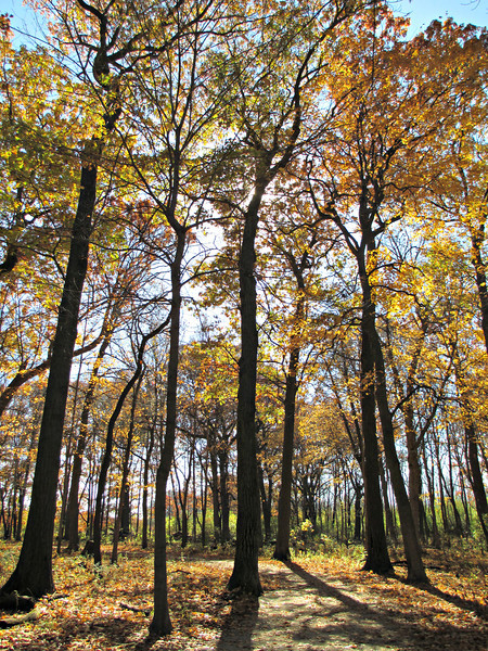 """Rays through the Canopy: Herrick Lake, Wheaton, Illinois"" - Daily Photo - 11/05/12"