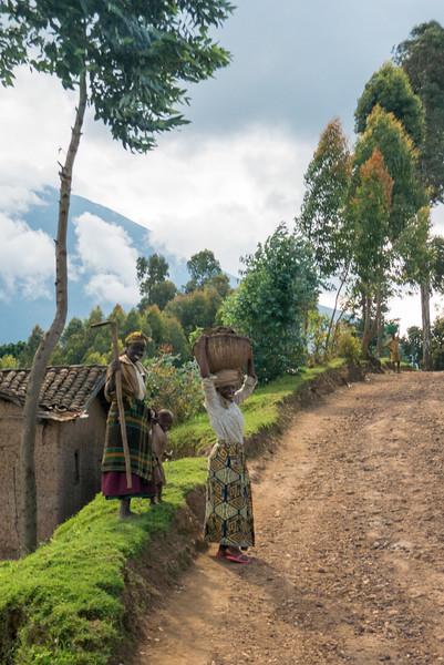 Spotted on a drive around Ruhengeri, Rwanda.