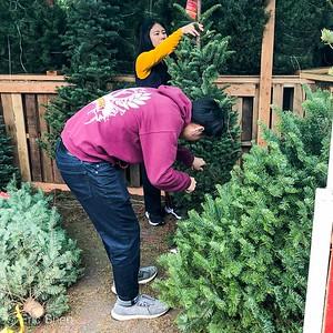 20191214 Xmas Tree Shopping