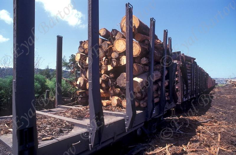 כריתת יערות 2.jpg
