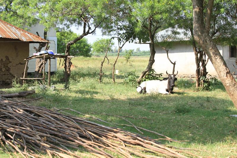 Kenya Part1 '15 544.JPG