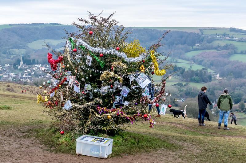 Dog's Christmas Tree-7796.jpg