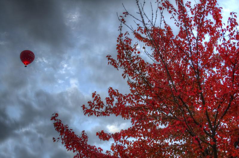 autumn - red tree red balloon (p)-1.jpg