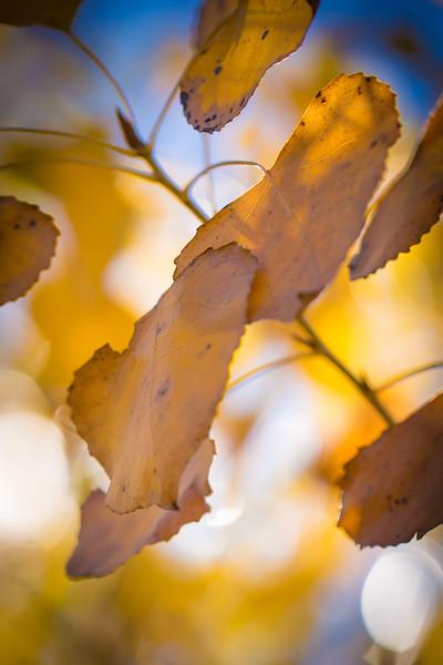 20151024-Fall Colors-108.jpg