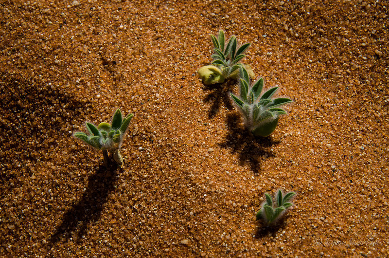 Namibia-4139.jpg