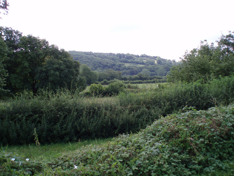 Granpa's view (Camarthen)