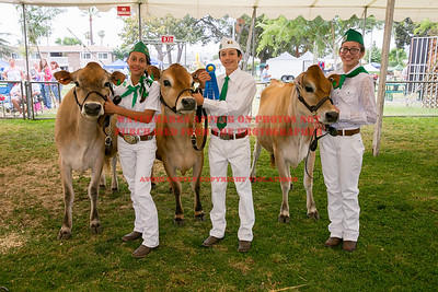 2015 Citrus Fair - Dairy
