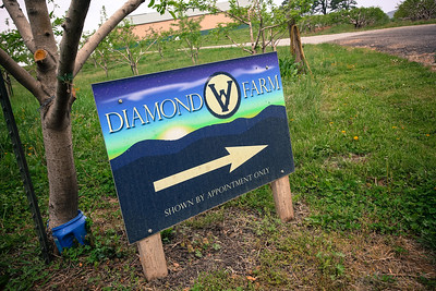 Teal & Nate - Diamond V Farm - Wedding Selects