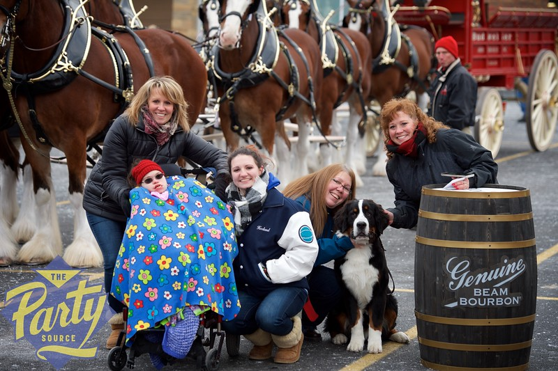 Clydesdale Portraits 68.jpg