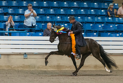 2014 The Tennessee Walking Horse Celebration