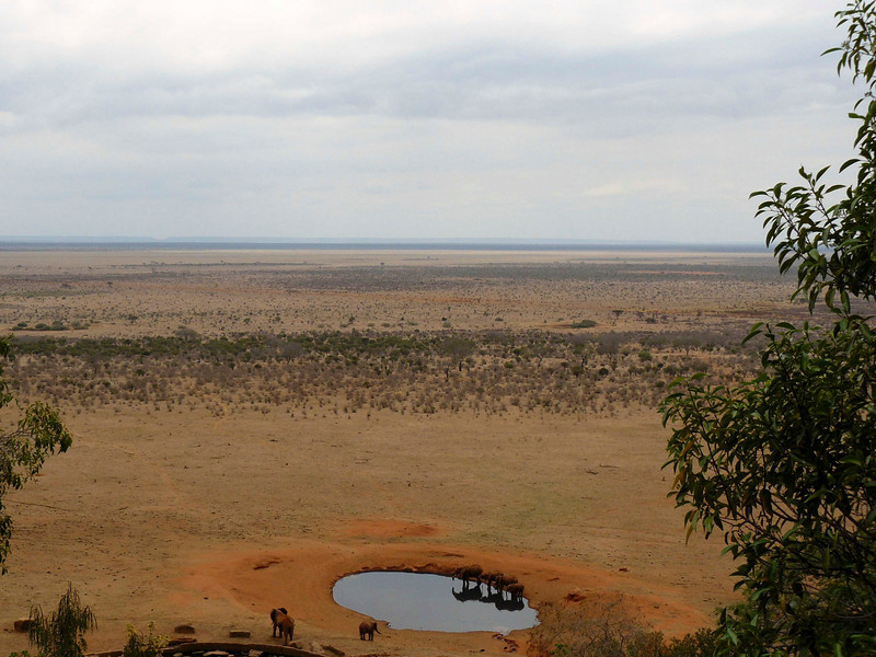 Elephants Watering Hole Tsavo East.jpg