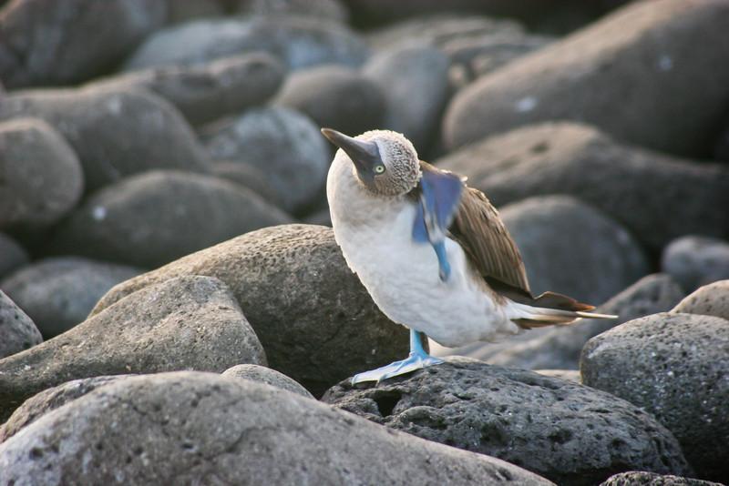 Very flexible birds
