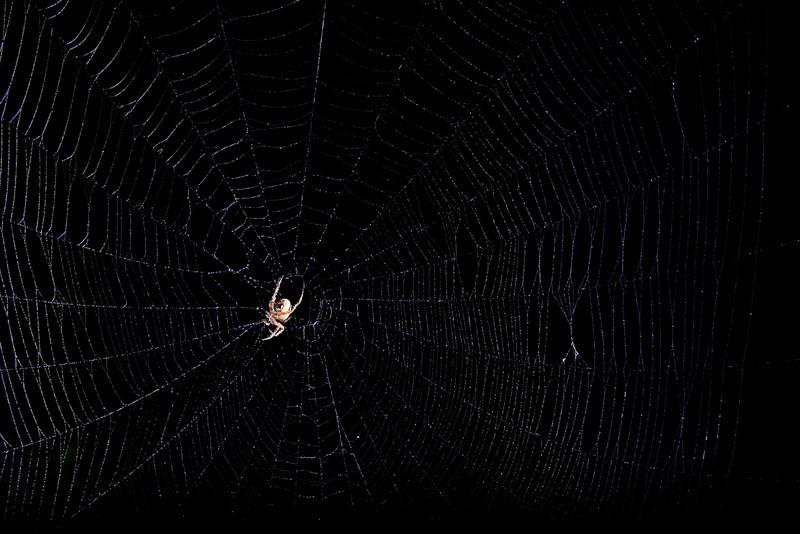Spiderman-84.jpg
