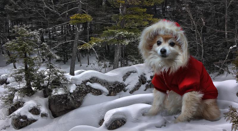 red-dog8.jpg