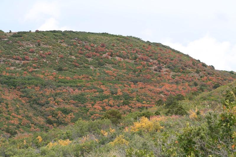 20080909-138 - LaSal Mountain Loop - 05 Fall Foilage.JPG