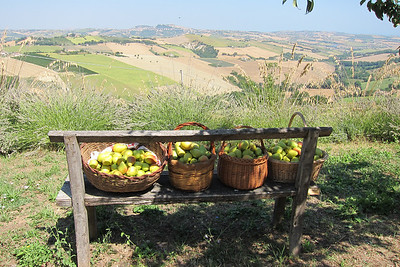 Food of Le Marche