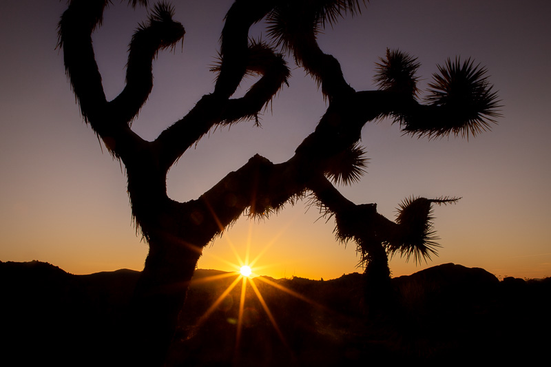 March 9 - Cloudless sunrise at Joshua Tree National Park.jpg