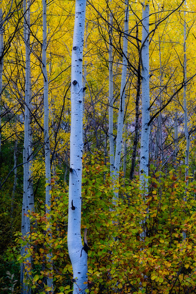 aspen trunks-8892orton.jpeg