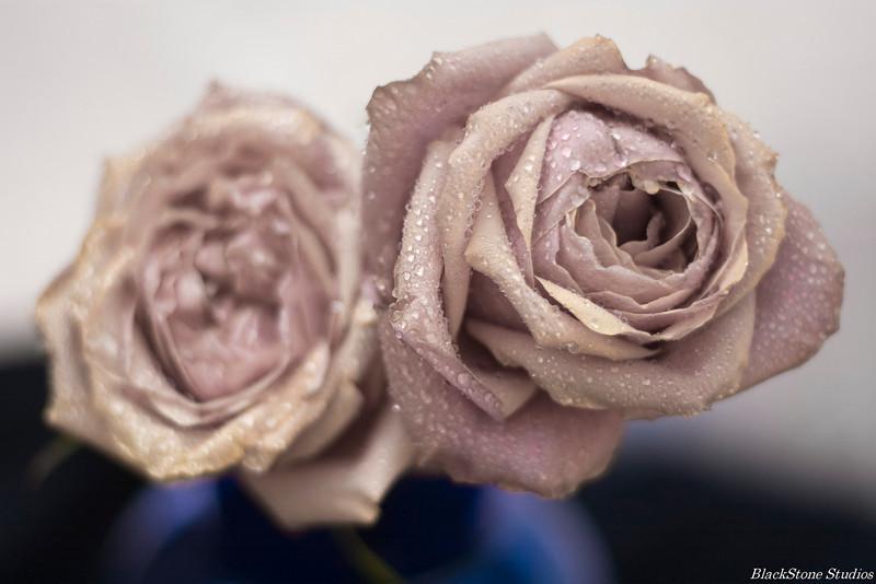roses directors cut
