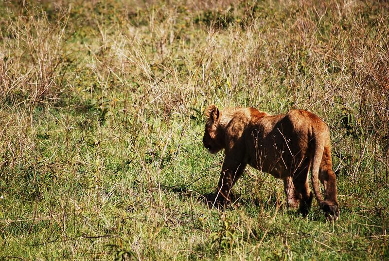 Ngorongoro (80).JPG