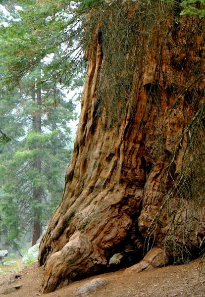 California Day 6 Sequoia 05-30-2017 89.JPG