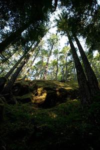 Strathcona Prov Park BC