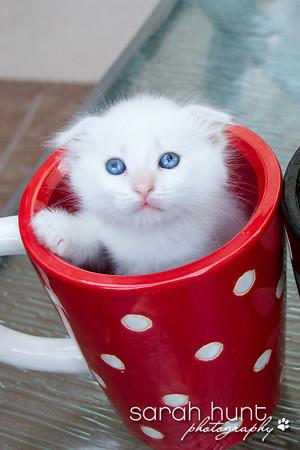 OCARC Cats & Kittens