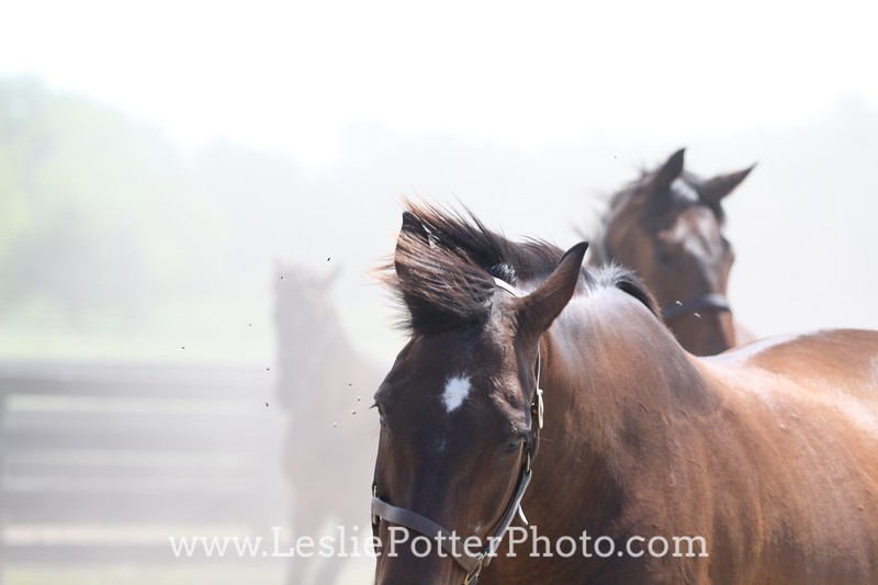 Horses in Dust Cloud