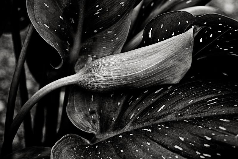 calla-on-leaf.jpg