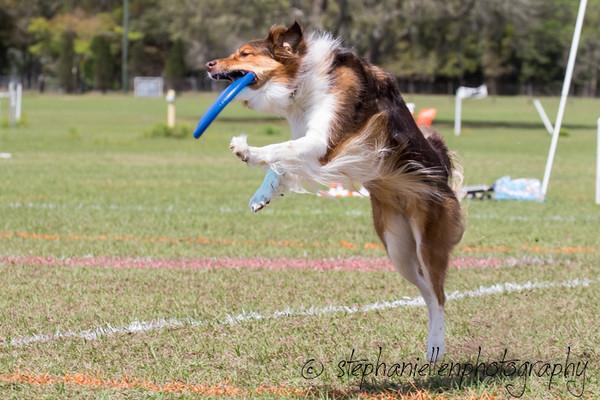 _MG_2950Up_dog_International_2016_StephaniellenPhotography.jpg