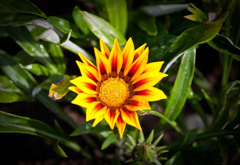 flowers june 2011-23.jpg
