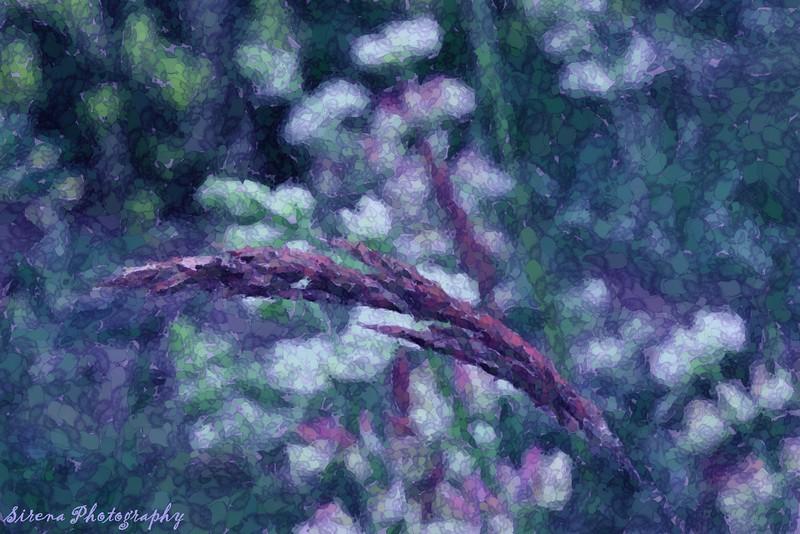 bending grass.JPG