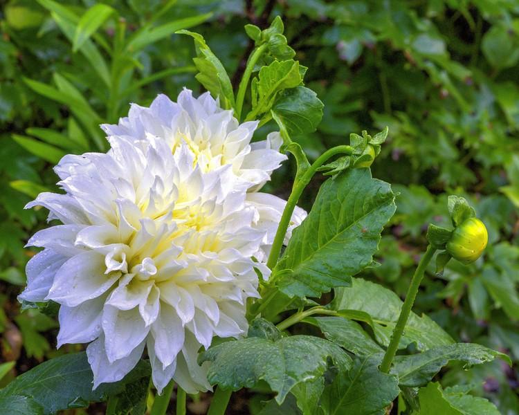 Garden 1, 241.jpg