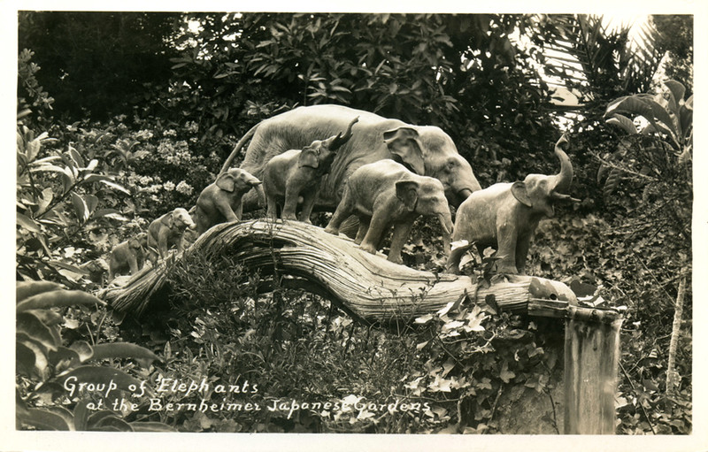 Elephants at Bernheimer Gardens