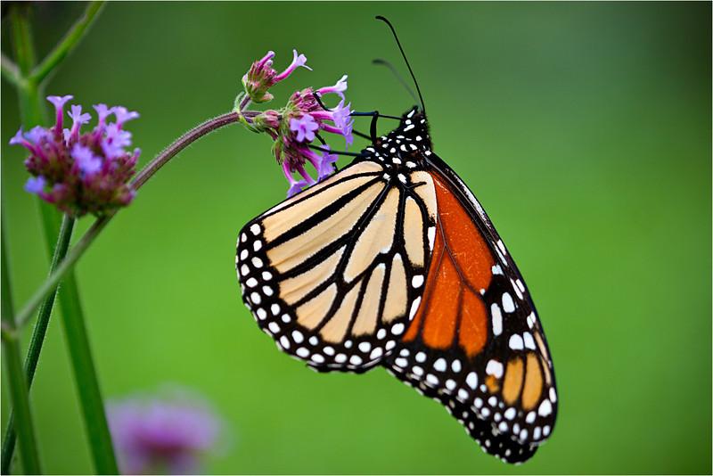 20110926_Butterfly_04.jpg