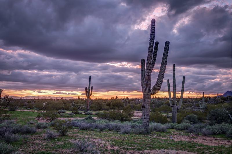 Arizona (3).jpg