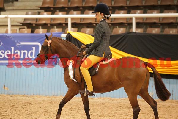 Arabians State Championships