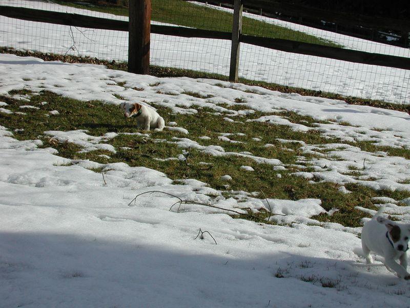 Feb 05- Puppies 003.jpg