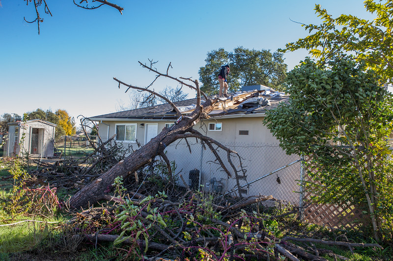 5671 Wallace Ave - Tree 1030am 12 16 2017 Extremly Windy Conditions-90.jpg