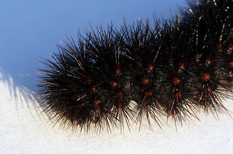 1988 Caterpillar.jpg