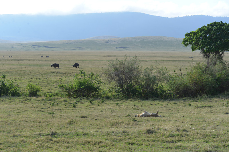 East Africa Safari 404.jpg