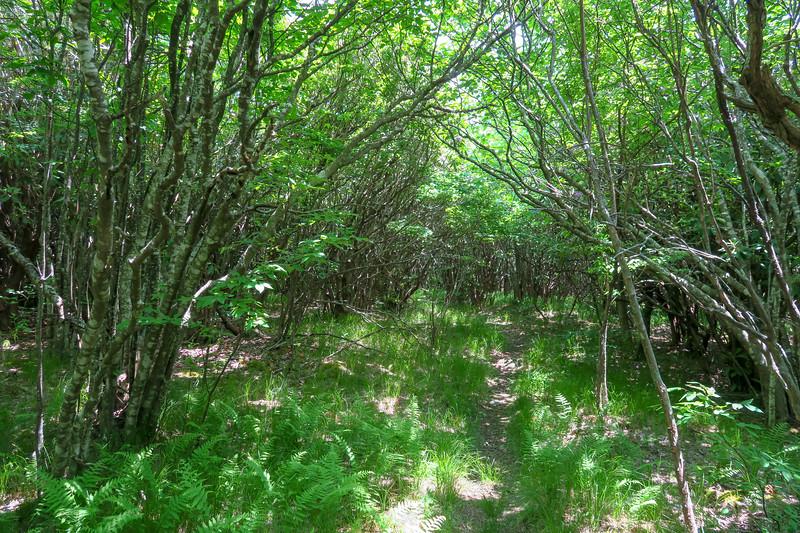 Greasy Cove Trail -- 5,280'