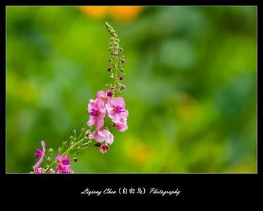 Unknown-flower 35