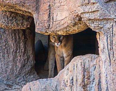 01-06 Arizona-Sonora Desert Museum