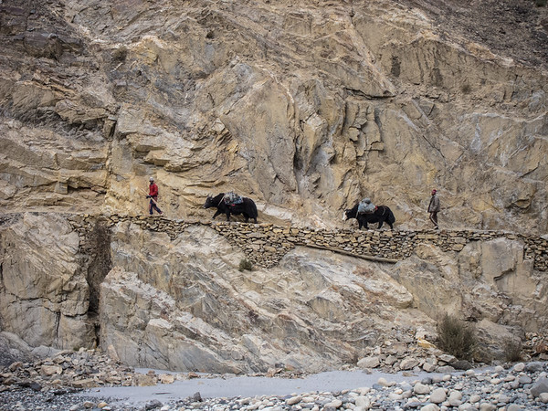 High-Altitude Herders of Pakistan