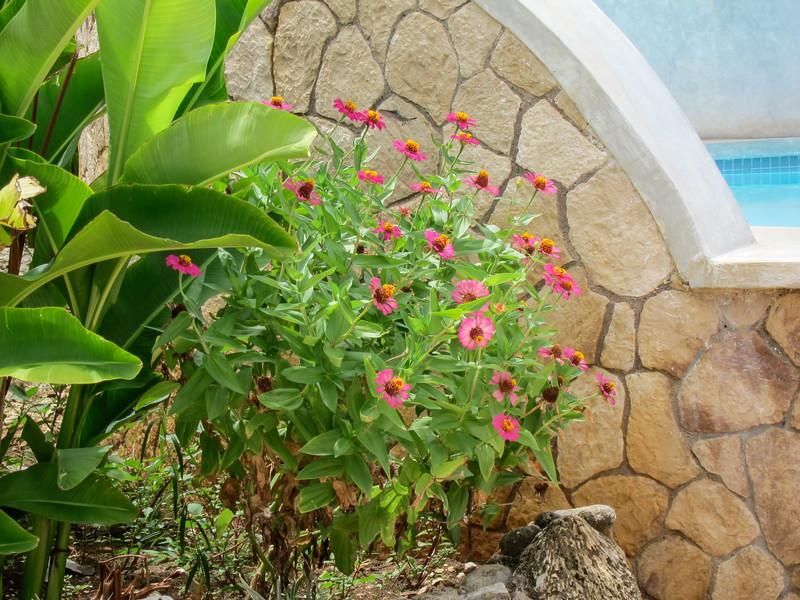 20110625-091515_BE7f_Canon PowerShot S95.jpg