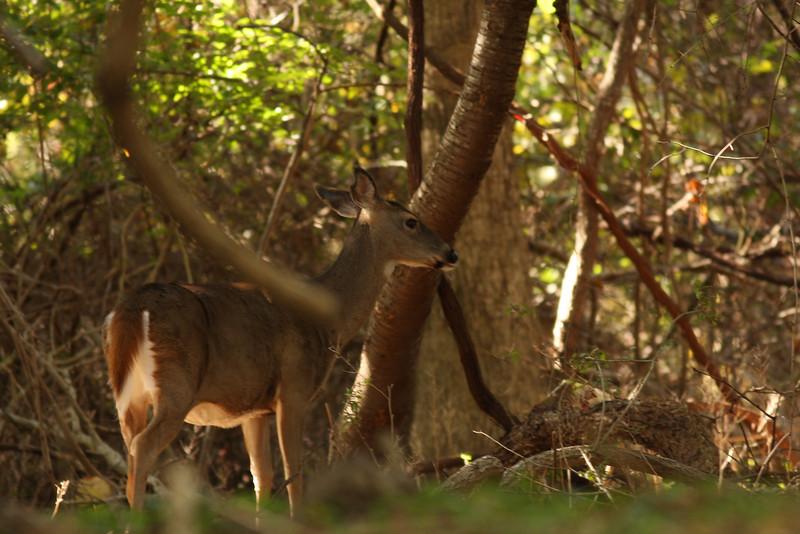 Elizabeth A Morton National Wildlife Refuge, Sag Harbor, NY.